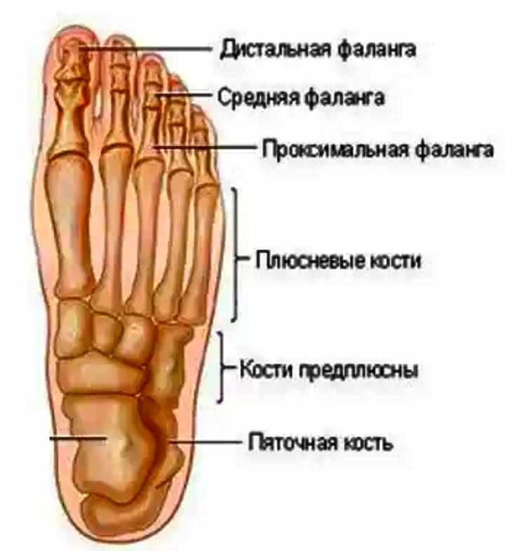 Кости пальцев ног