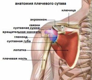 Как устроено плечо