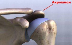 Строение плечевого комплекса
