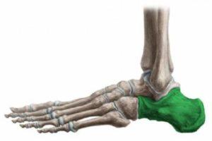 Детали скелета стопы - пятка