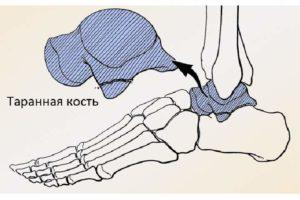 Детали скелета стопы - таранная кость