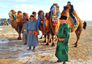 Производители шерсти верблюда