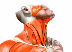 Воспаляются мышцы шейного отдела