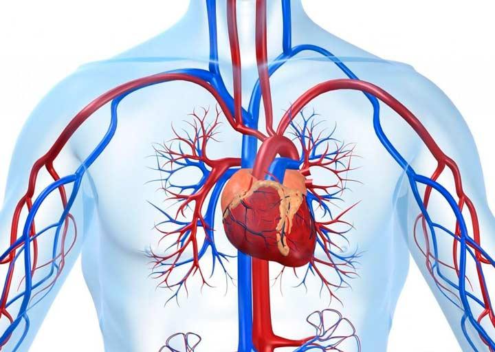 Польза рыбьего жира для сердечной мышцы
